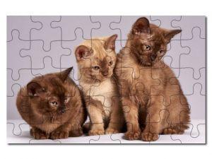 Puzzle A4 kočky