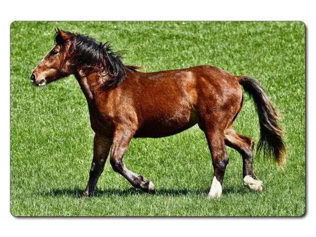 nažehlovačka s koněm