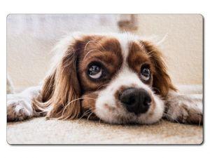 Nažehlovačka Pes