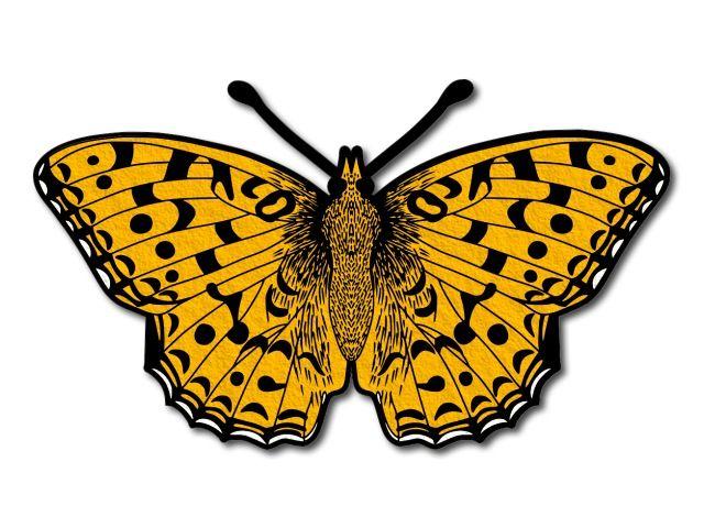 filcový motýl 3